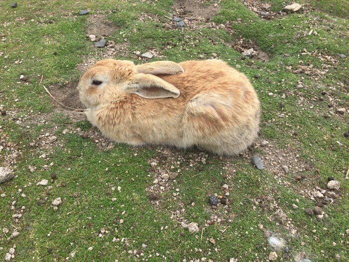 休暇村前の箱座りウサギ