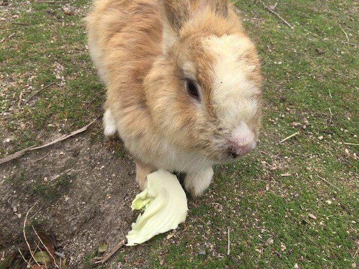 食いつきが悪いウサギ