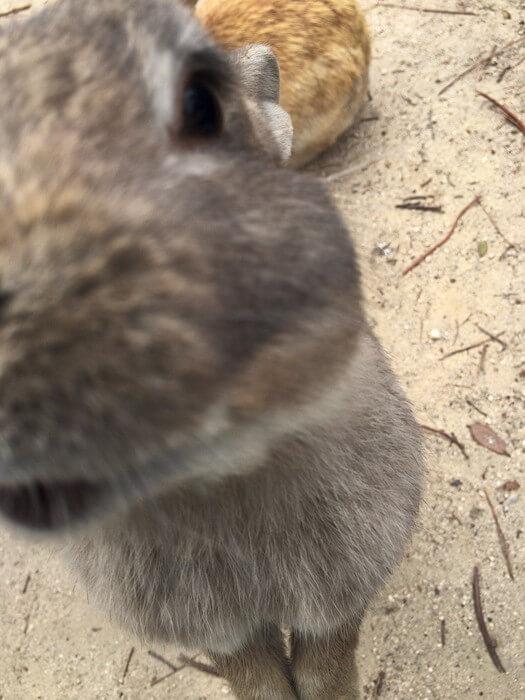 立ち上がって催促するウサギ